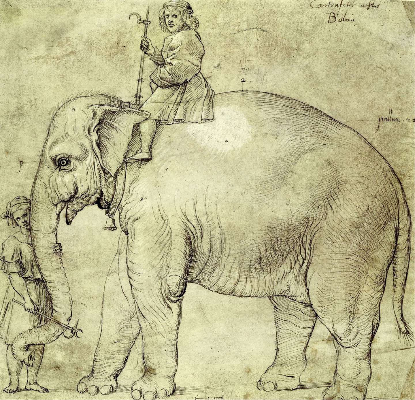 A sketch of Hanno and a rider, from 1514