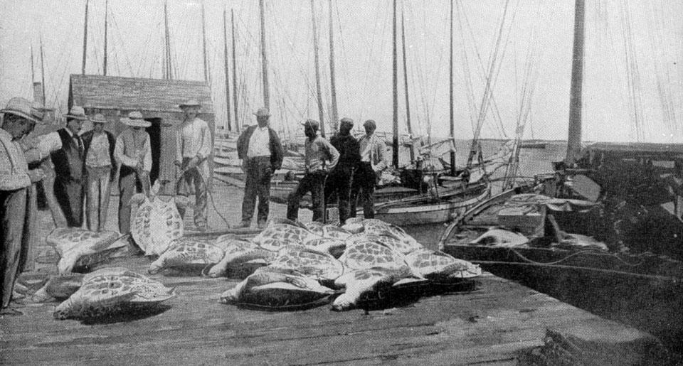 Sea Turtlers