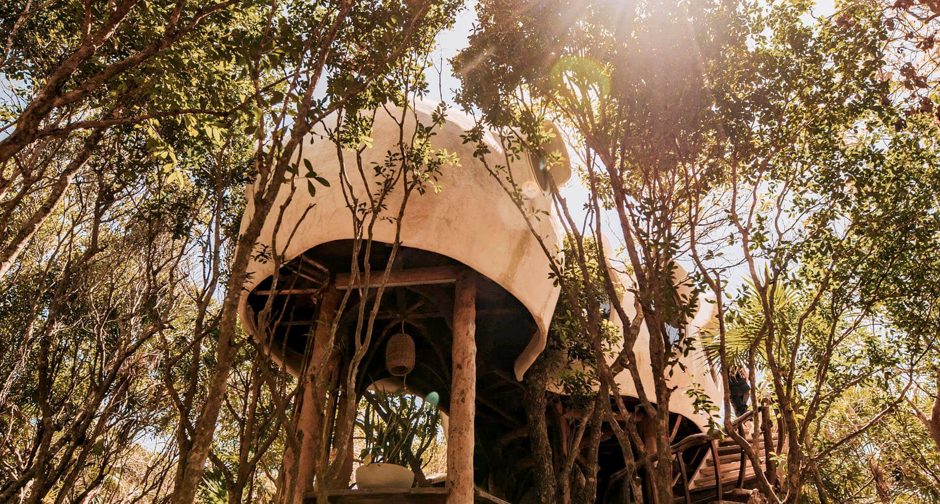 Casa Arbol